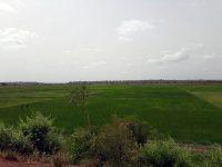 Bafatá - Bolanhas de arroz
