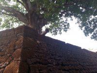 Pormenor da fortaleza de Bissau