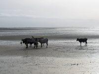 Fim de tarde na praia em Orango